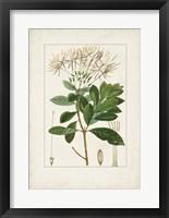 Antique Turpin Botanical II Framed Print