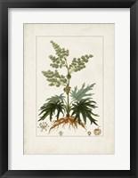 Framed Antique Turpin Botanical III