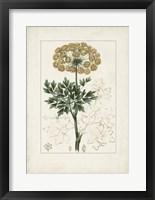 Framed Antique Turpin Botanical VI