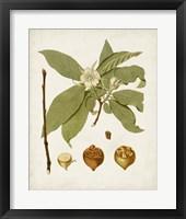 Antique Leaves I Framed Print