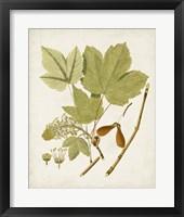 Framed Antique Leaves IV