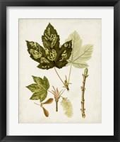 Antique Leaves V Framed Print