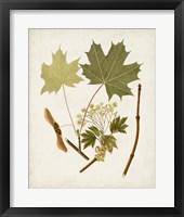 Framed Antique Leaves VI