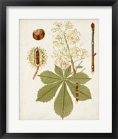Antique Leaves VIII Framed Print