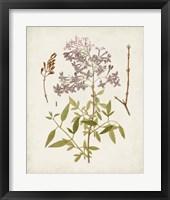 Vintage Flowering Trees I Framed Print