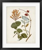 Vintage Flowering Trees IV Framed Print