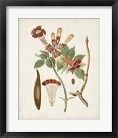 Vintage Flowering Trees V Framed Print