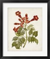 Vintage Flowering Trees VI Framed Print