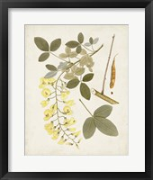 Vintage Flowering Trees VII Framed Print