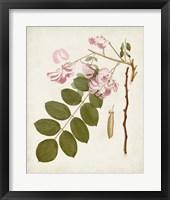 Framed Vintage Flowering Trees VIII