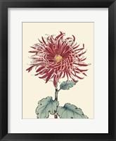 Chrysanthemum Woodblock I Framed Print