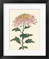 Chrysanthemum Woodblock II Framed Print