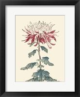 Chrysanthemum Woodblock III Framed Print