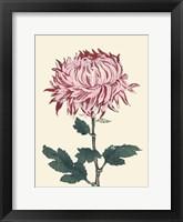 Chrysanthemum Woodblock IV Framed Print