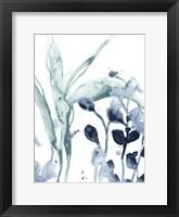 Blue Kelp I Framed Print