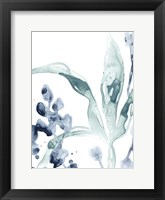 Blue Kelp IV Framed Print