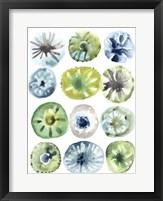 Framed Sea Urchin Assortment I
