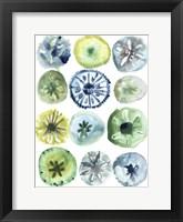 Sea Urchin Assortment II Framed Print
