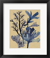 Underwater Forest I Framed Print