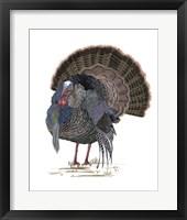 Turkey Study II Framed Print