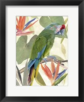 Tropical Parrot Composition I Framed Print