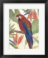 Tropical Parrot Composition II Framed Print