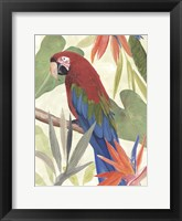 Tropical Parrot Composition III Framed Print