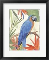 Tropical Parrot Composition IV Framed Print