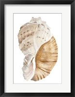 Seashell I Framed Print