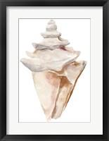 Seashell III Framed Print