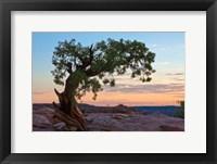 Framed Ancient Tree