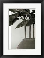 Framed Banana Trees