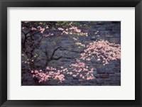Framed Dogwood in Pink