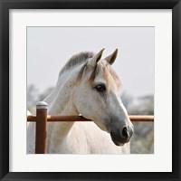 Framed White Horse 3
