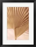 Pastel Fan 1 Framed Print
