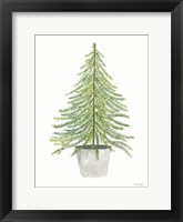 Fir Tree in Pot II Framed Print