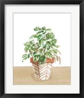 Herb Garden II White Framed Print