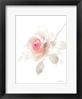 Gentle Rose II Framed Print