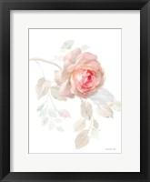 Gentle Rose I Framed Print