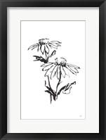 Line Echinacea II Framed Print