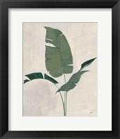Palm Botanical II Framed Print