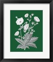 Green Botanical VI Framed Print