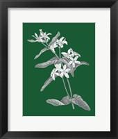 Green Botanical IV Framed Print