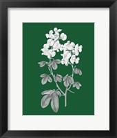 Green Botanical III Framed Print