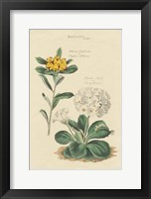 Botanical Print II Framed Print