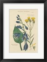Botanical Print I Framed Print