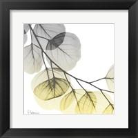 Brilliant Eucalyptus 2 Framed Print