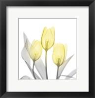 Framed Brilliant Tulips 1