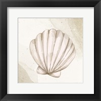 Calming Shell 2 Framed Print