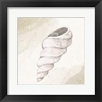 Calming Shell 3 Framed Print